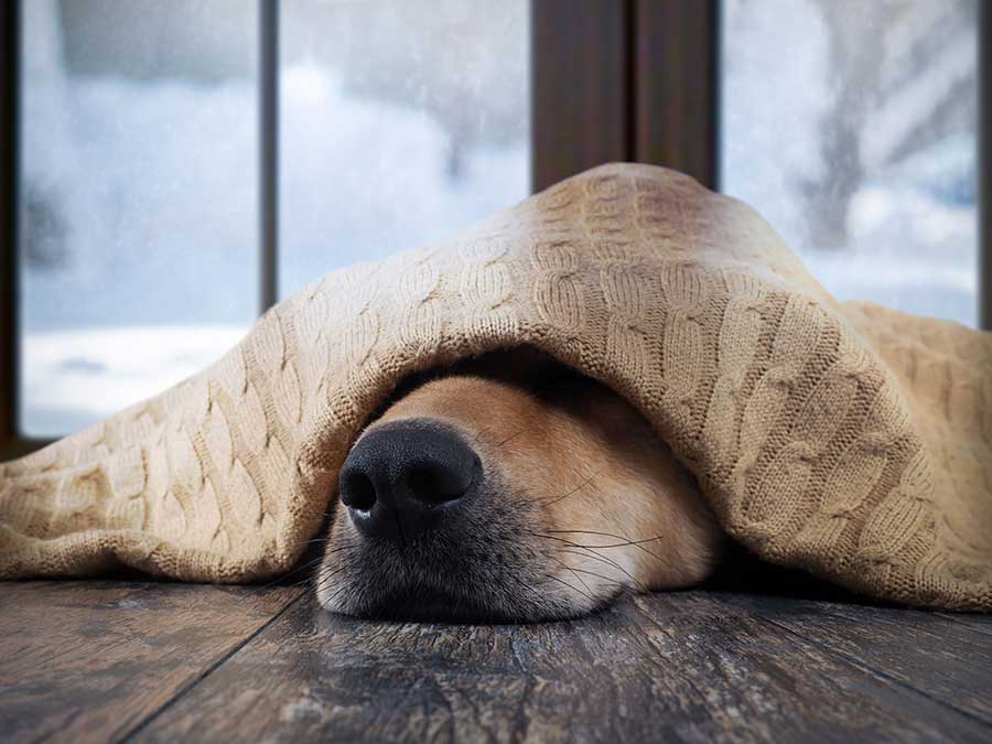 dog sleeping